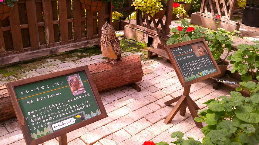 山陰(2016.3)旅行記  〜出雲・伯耆路〜  その5    松江フォーゲルパーク。  フクロウと花と…錦鯉?